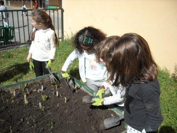On plante les semis dans les palocs