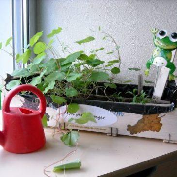 Les plantes ont bien poussé
