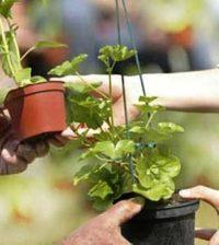 Troc de plantes ce dimanche