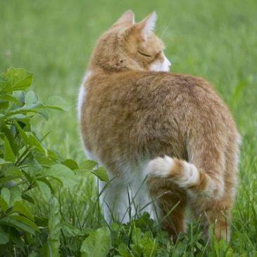 Comment éviter les chats dans les jardins ?