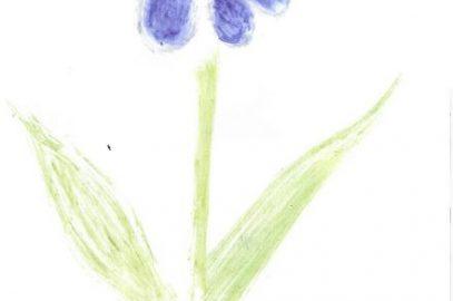 Défi n°11 : dessiner avec les plantes