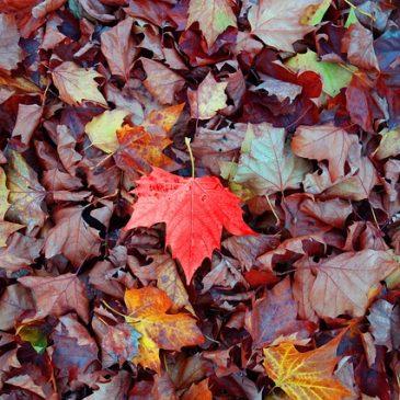 Wanted :  feuilles mortes s'il vous plait !