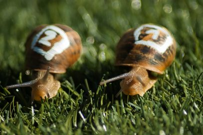 Défi n°2 : La course des escargots