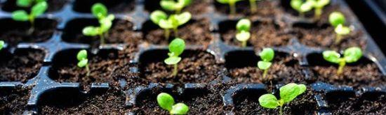 Troc de plants et de graines