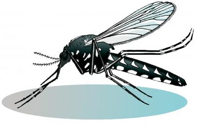 Le moustique tigre, une espèce envahissante…