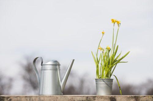 En Mai, des plantes pour les insectes estivaux