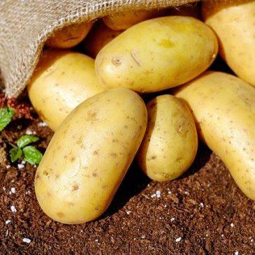 Plantez des patates !
